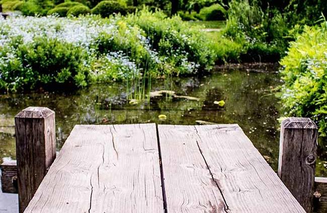 Outdoor Pond Garden Maintenance